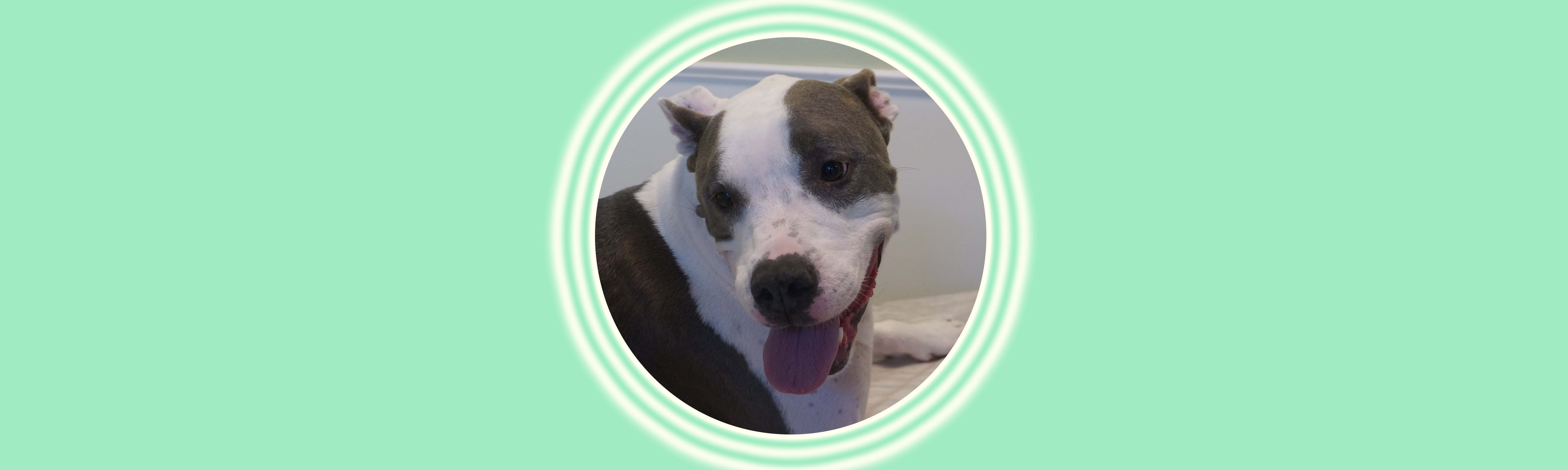 Dog of the Week: Dolce