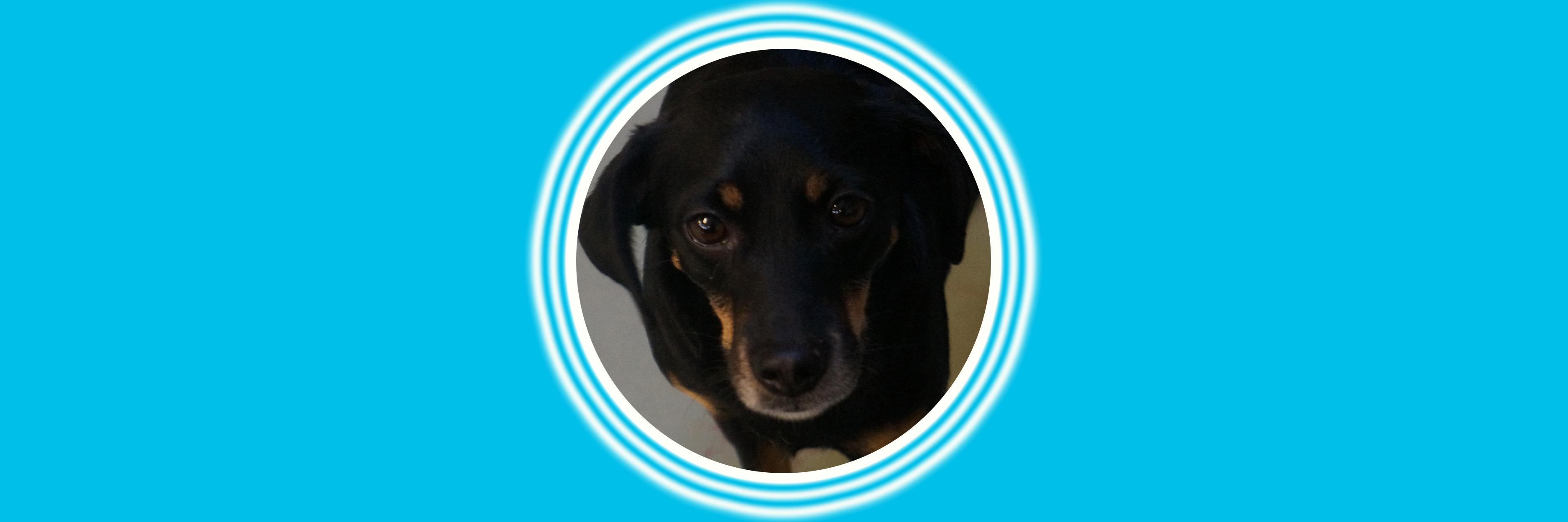 Dog of the Week: Frankie
