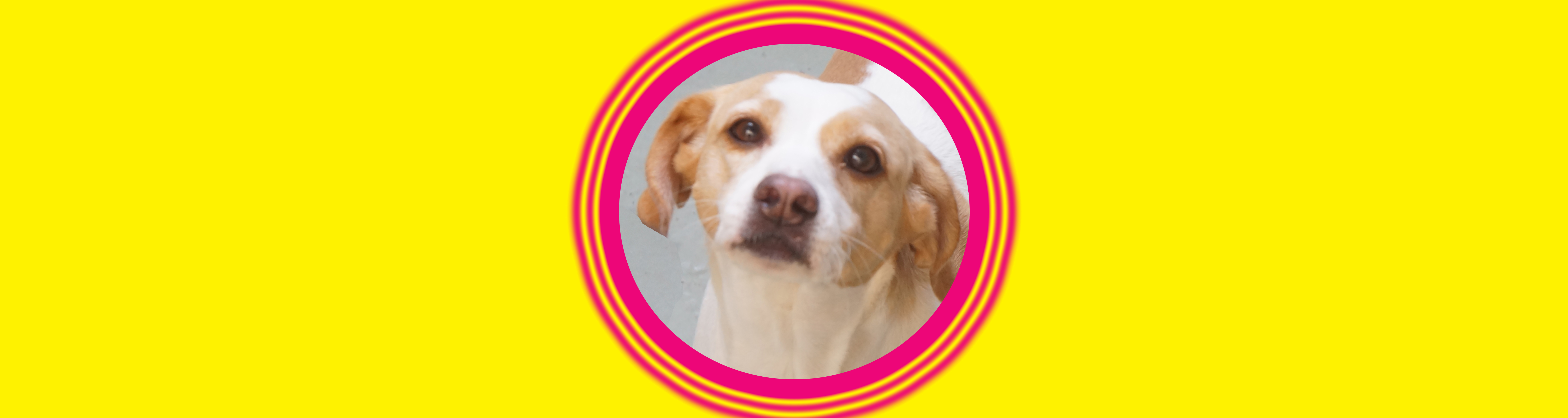 Dog of the Week: Bailey S.
