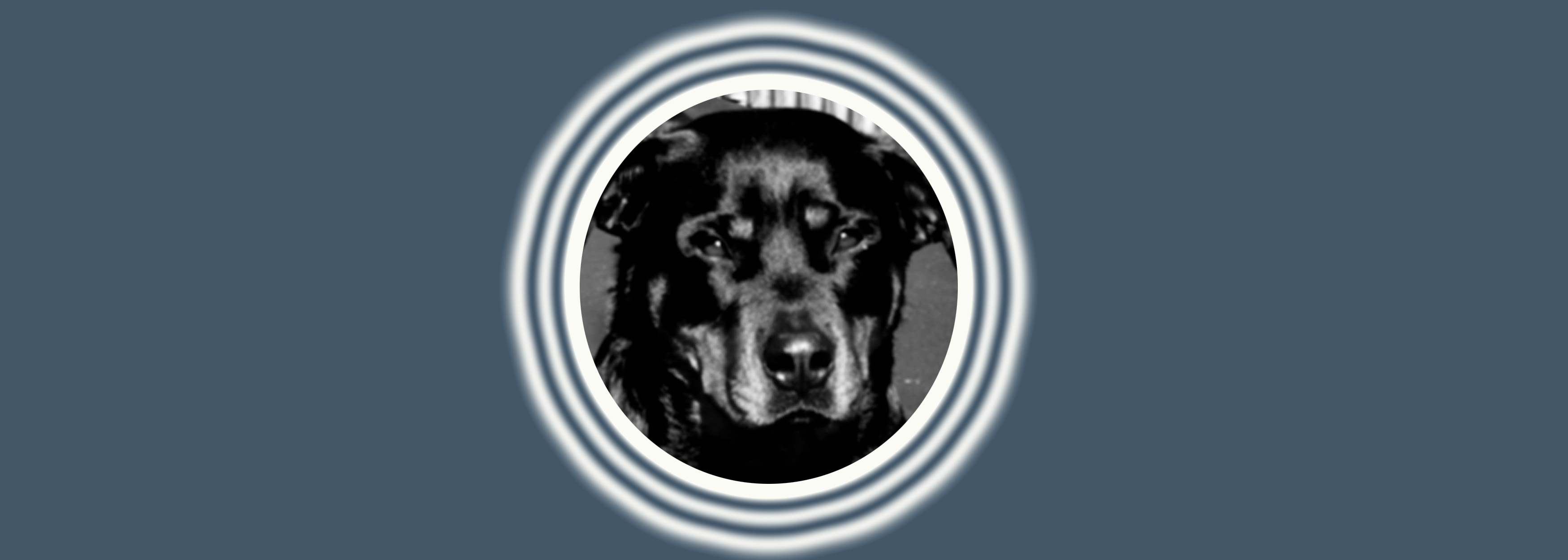 Dog of the Week: Dyta