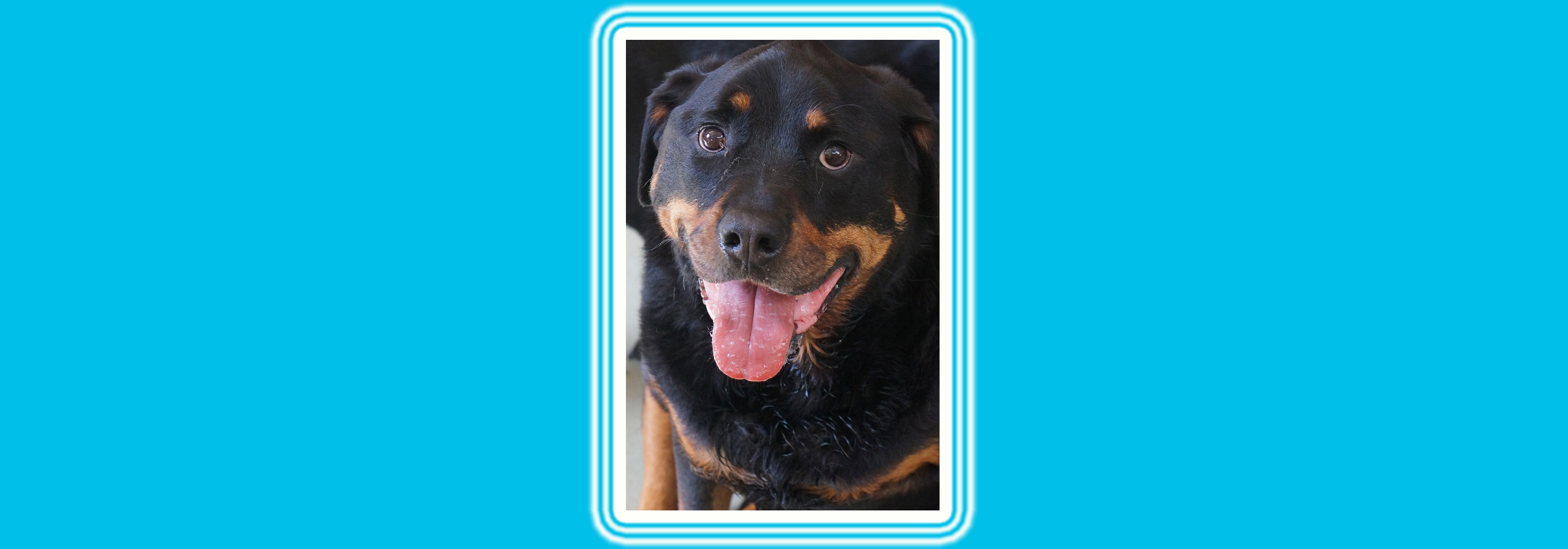 Dog of the Week: Maycee