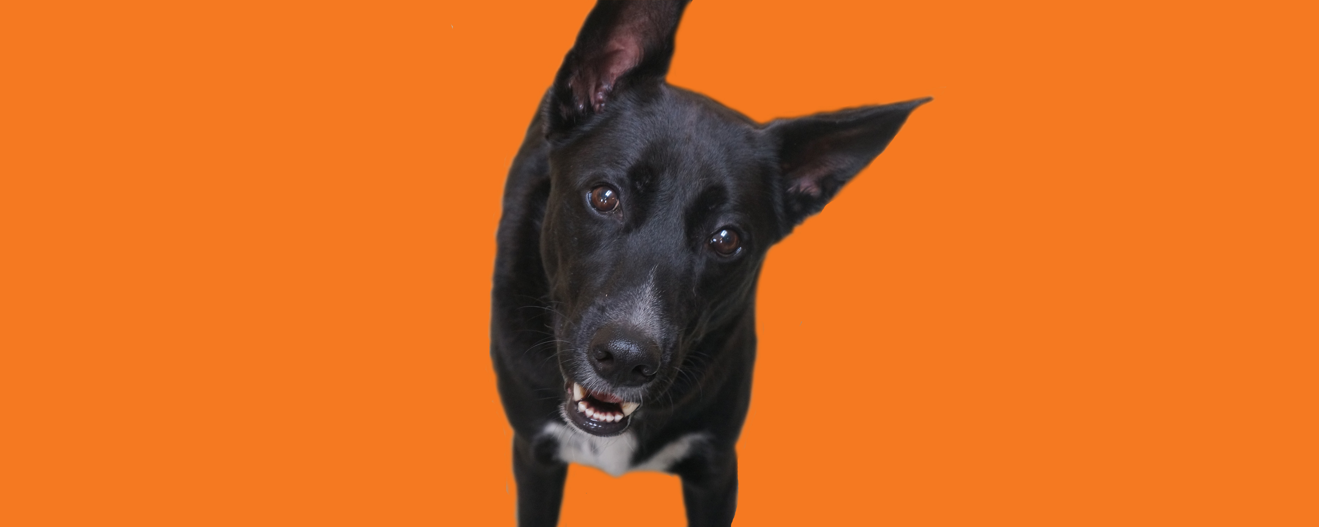Dog of the Week: Happy P.