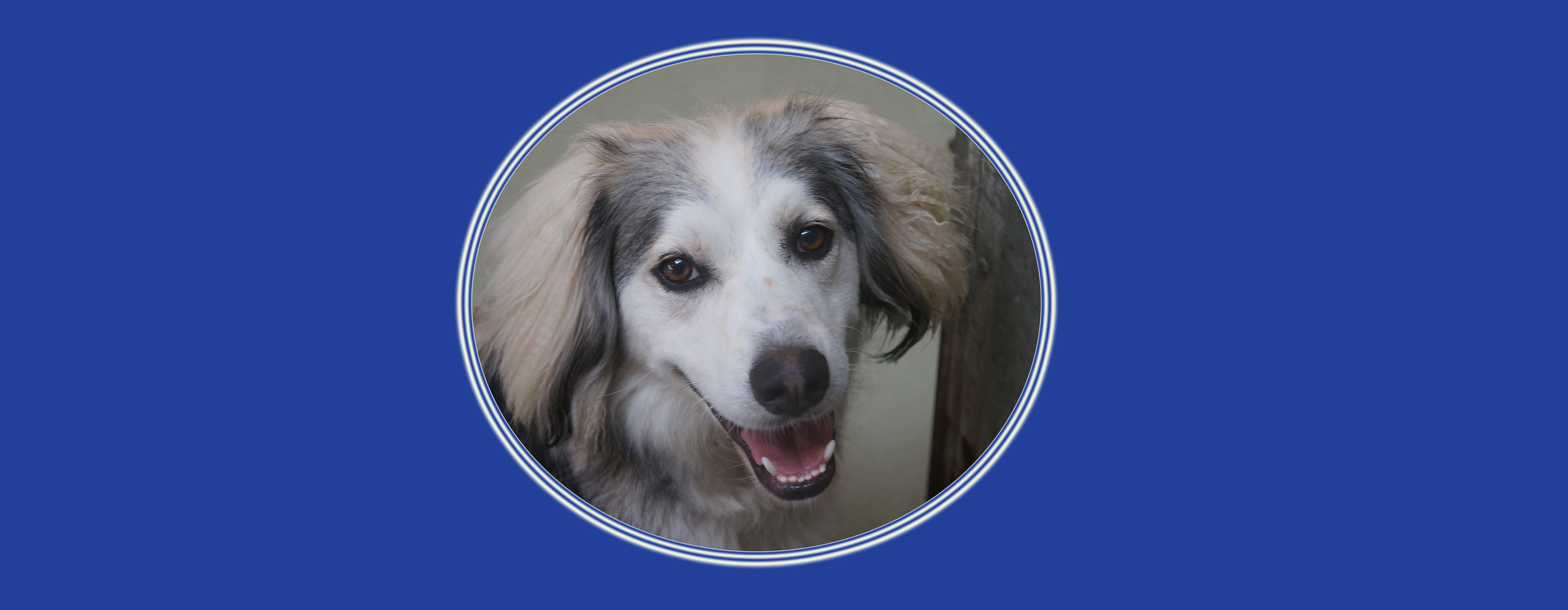 Dog of the Week: Finley