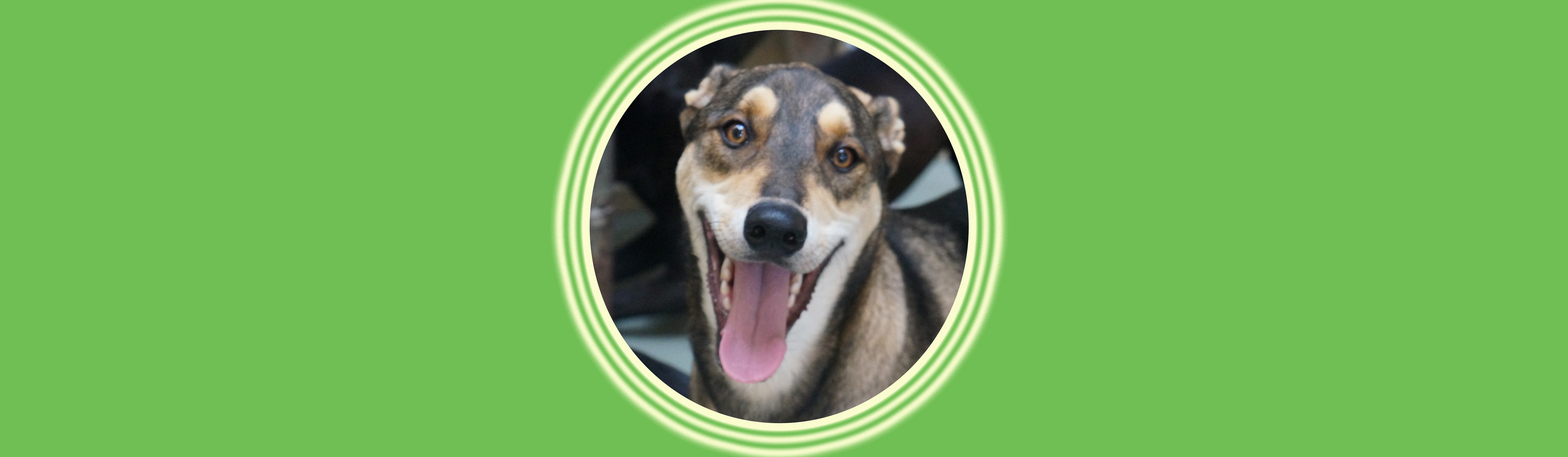 Dog of the Week: Kevin
