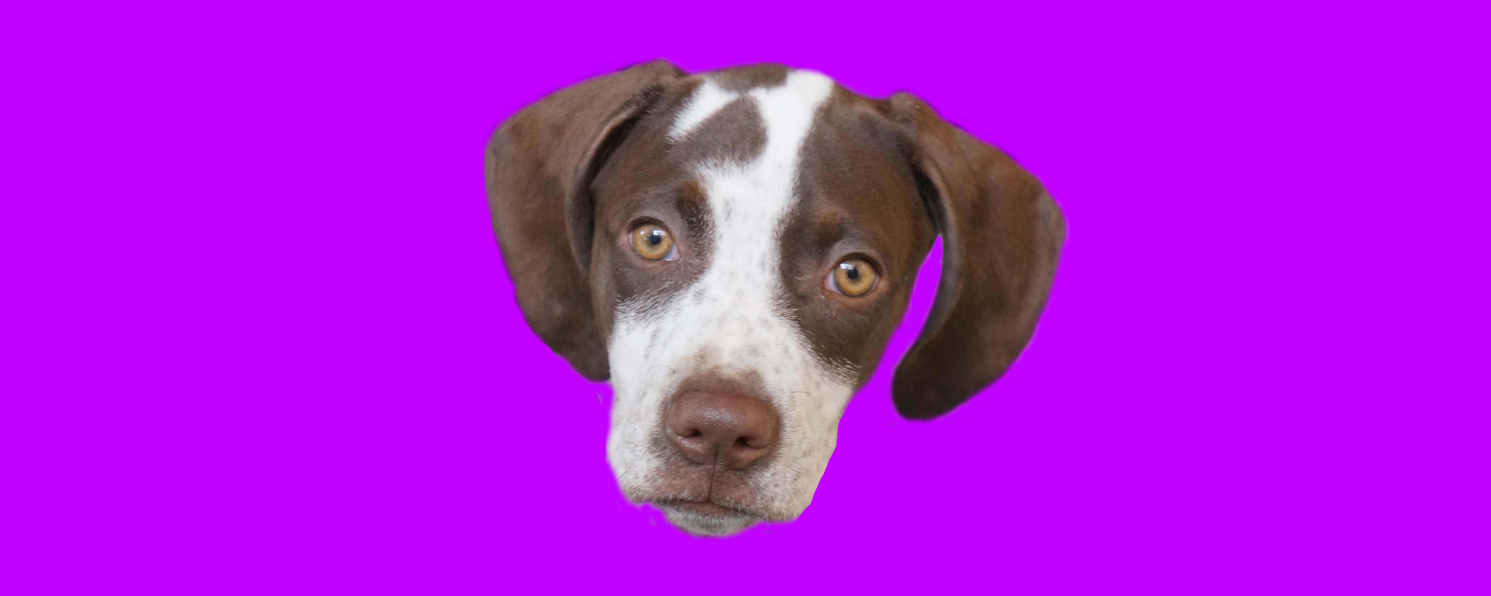 Dog of the Week: Libby