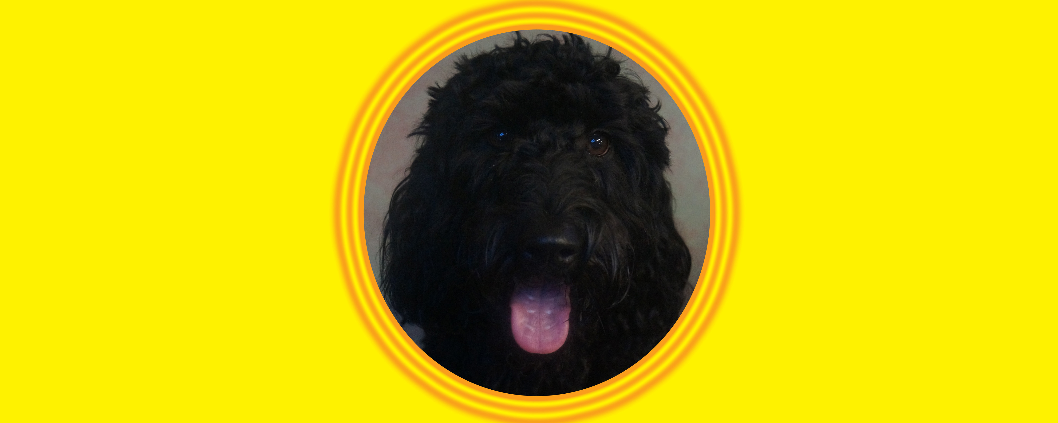 Dog of the Week: Mojo S.