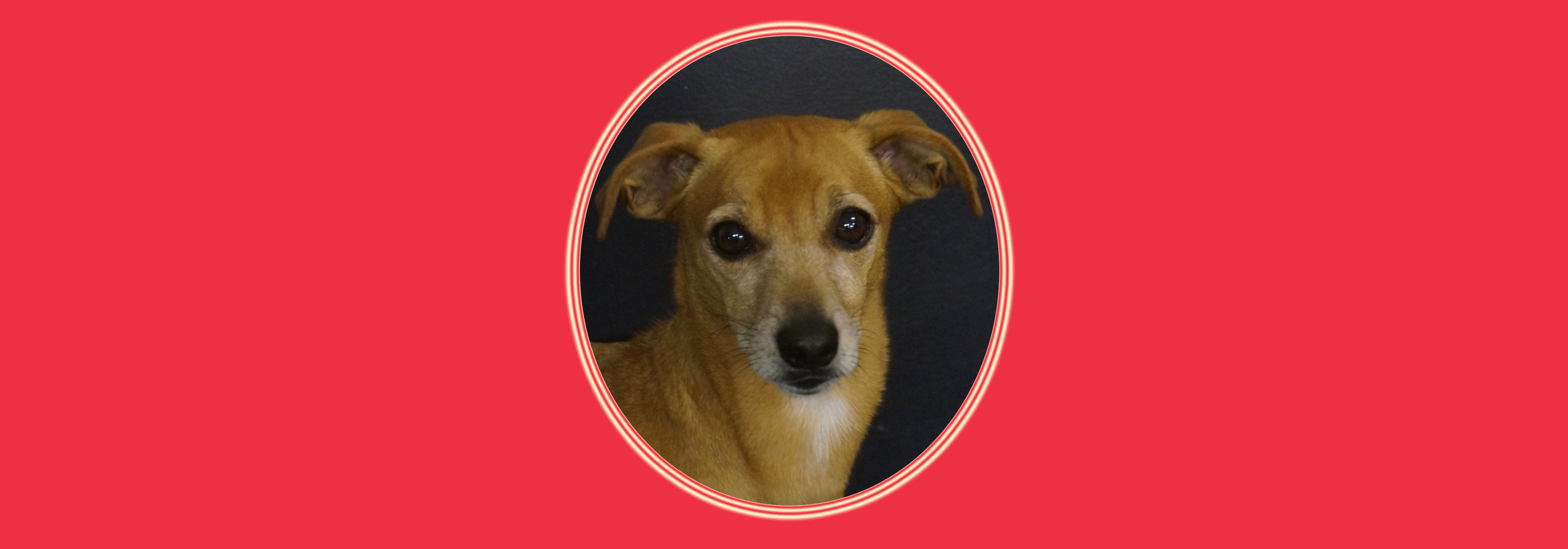 Dog of the Week: Malo M