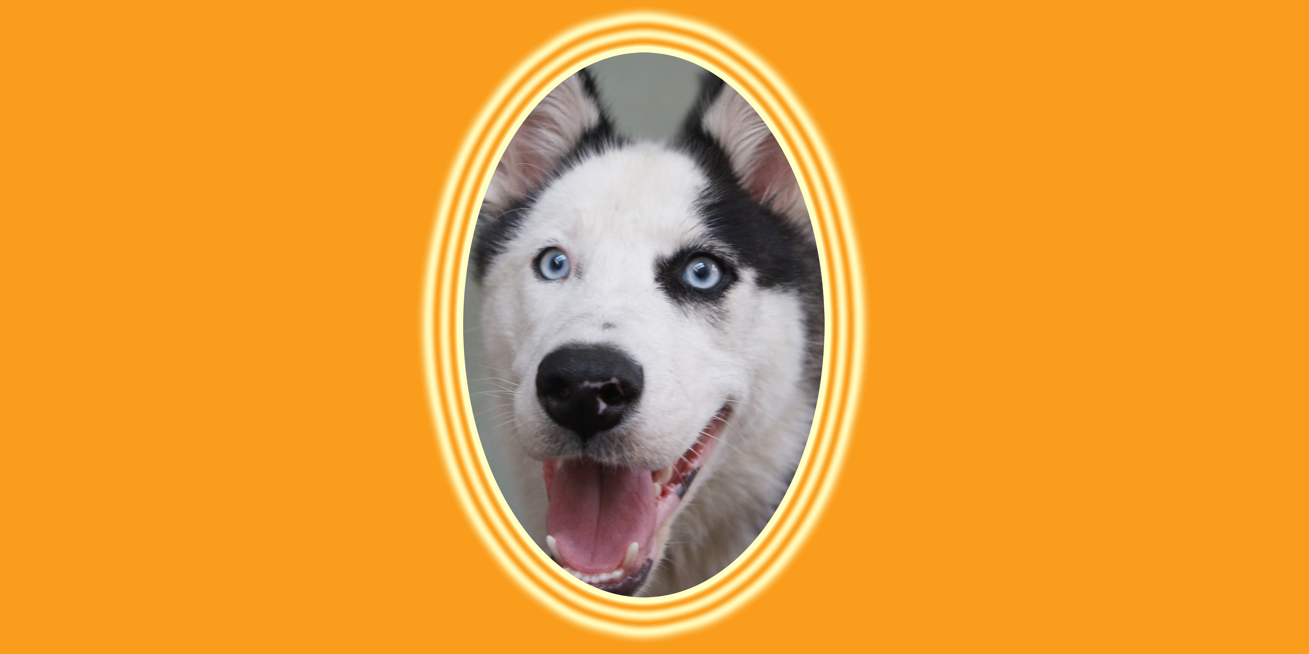 Dog of the Week: Ghost