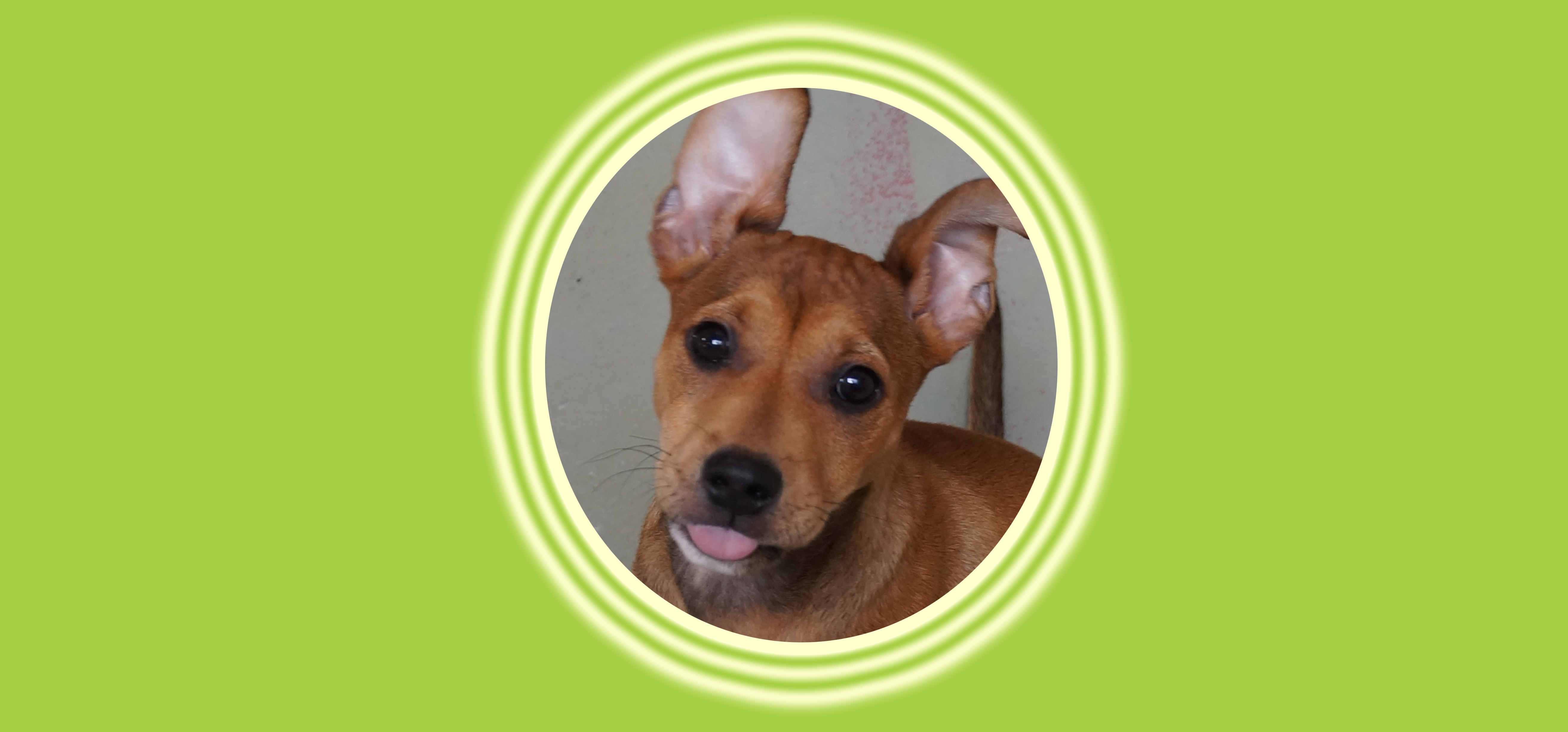 Dog of the Week: Louise S.