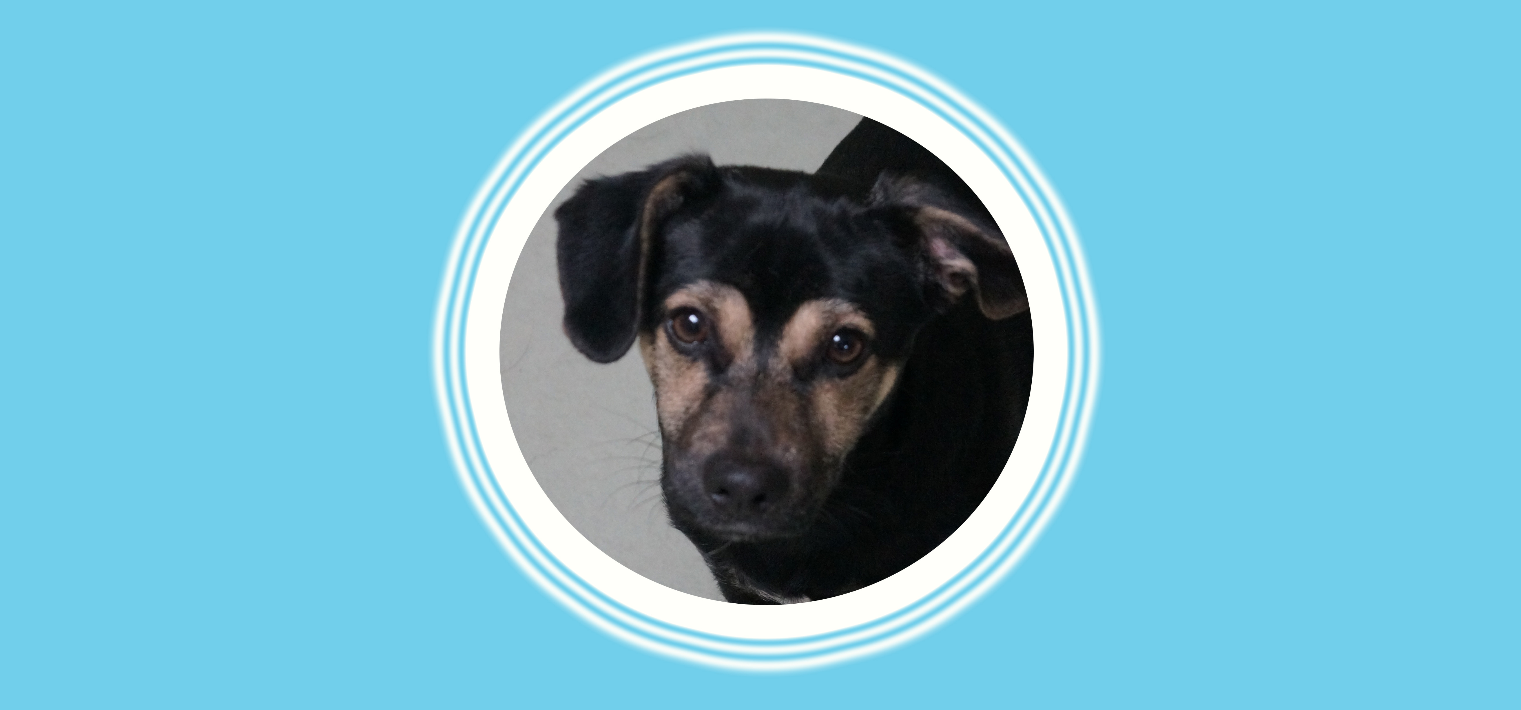 Dog of the Week: Max L.