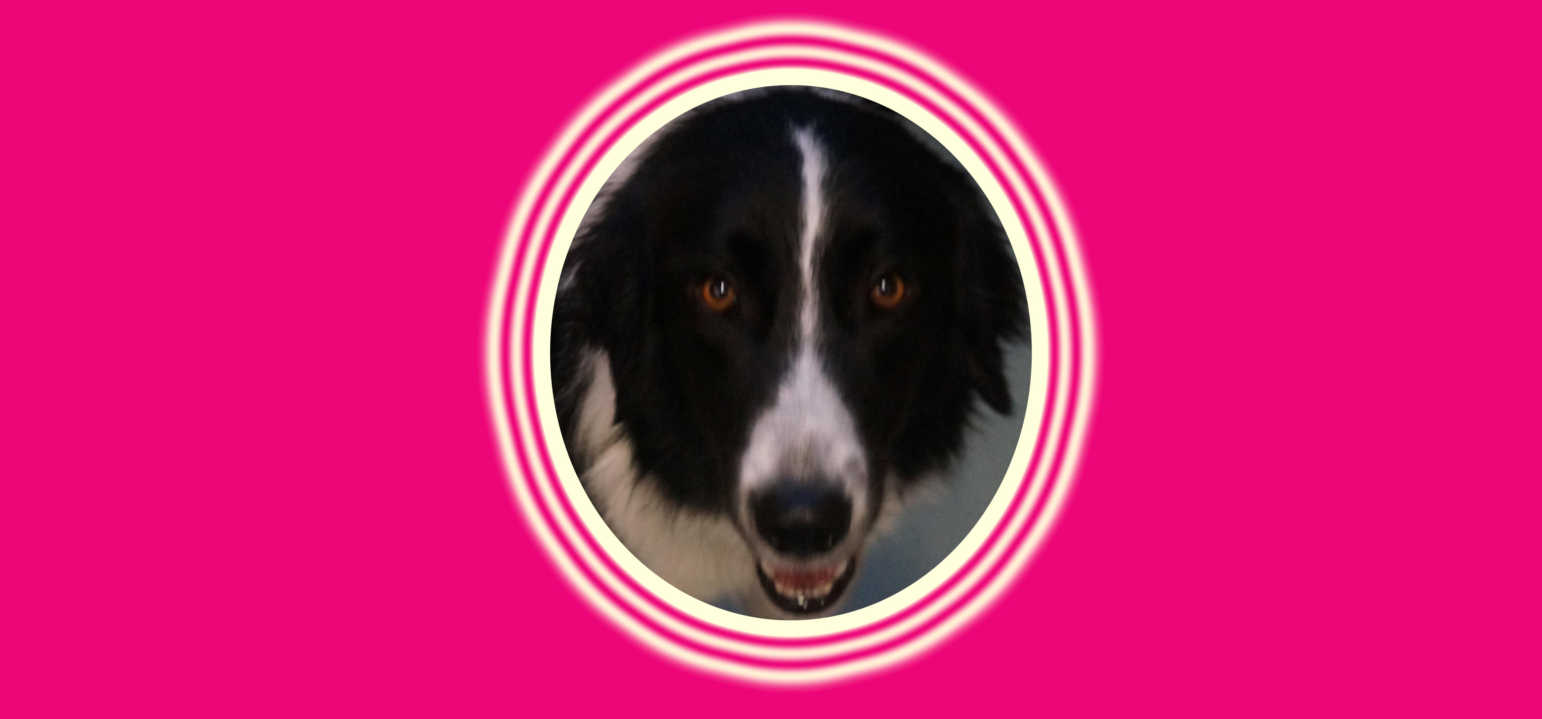 Dog of the Week: Trixie J.