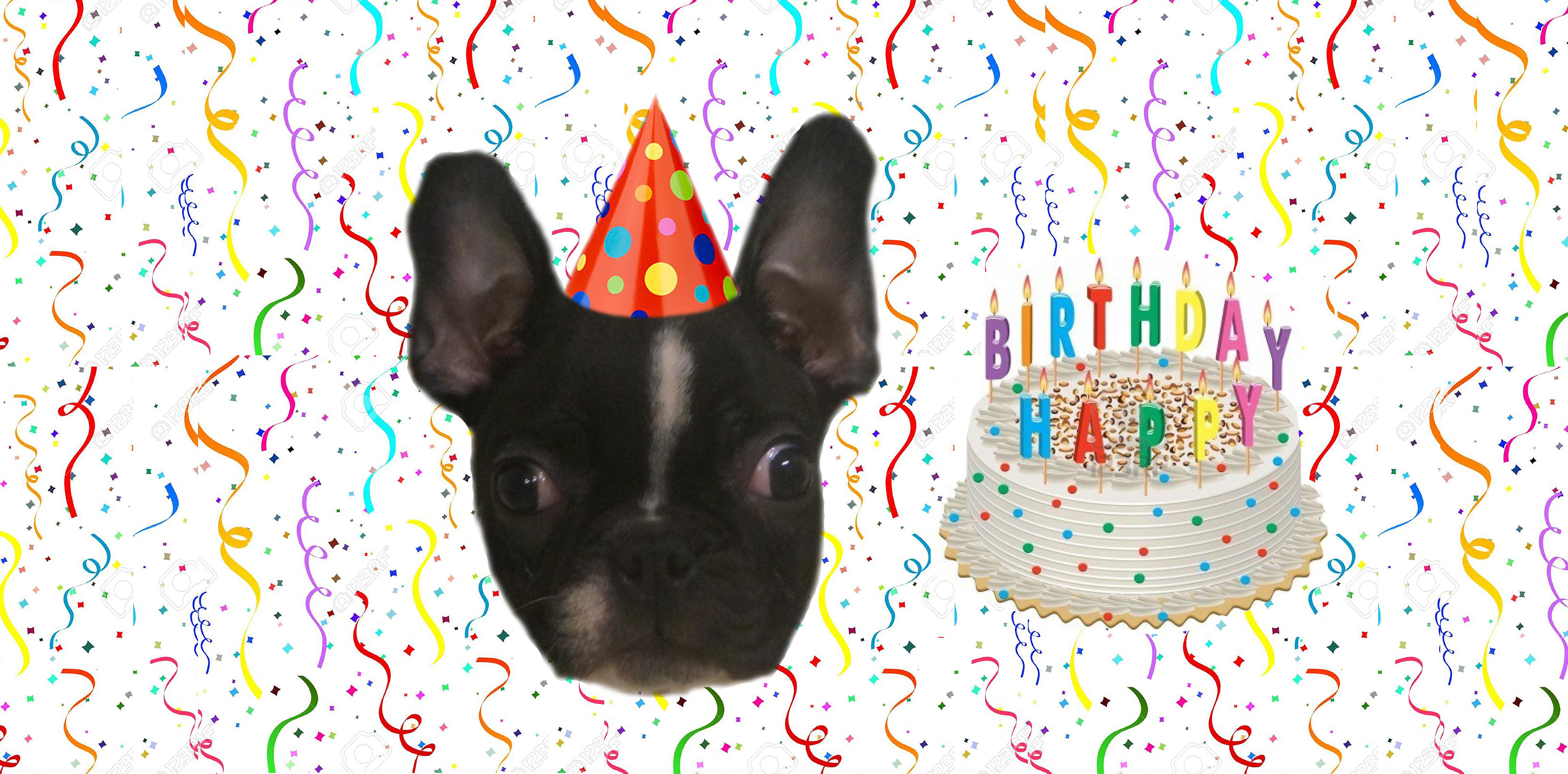 Whiskey's 1st Birthday!!!!!