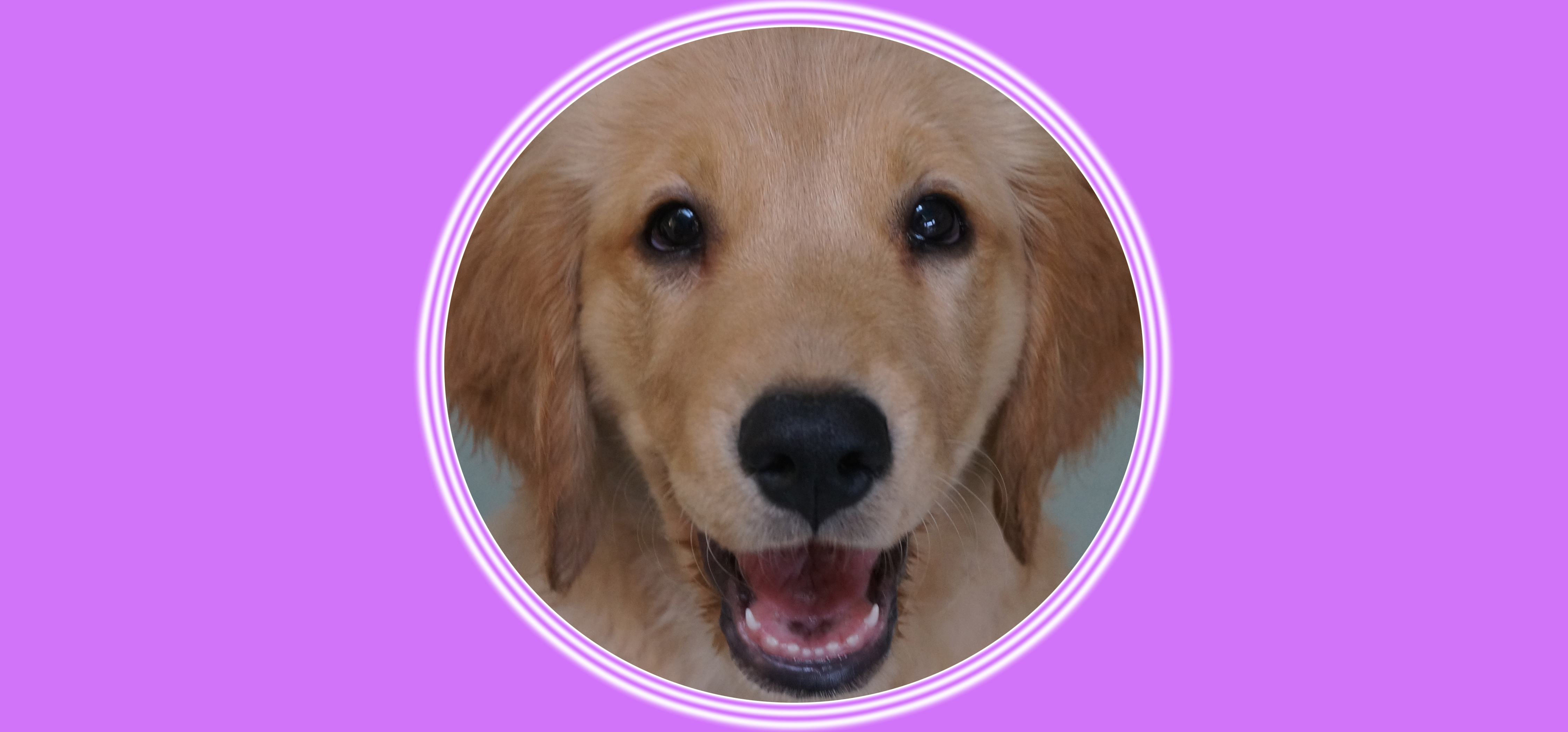 Dog of the Week: Luka P.