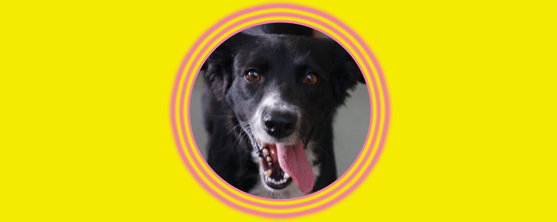 Dog of the Week: Jane Austin A.