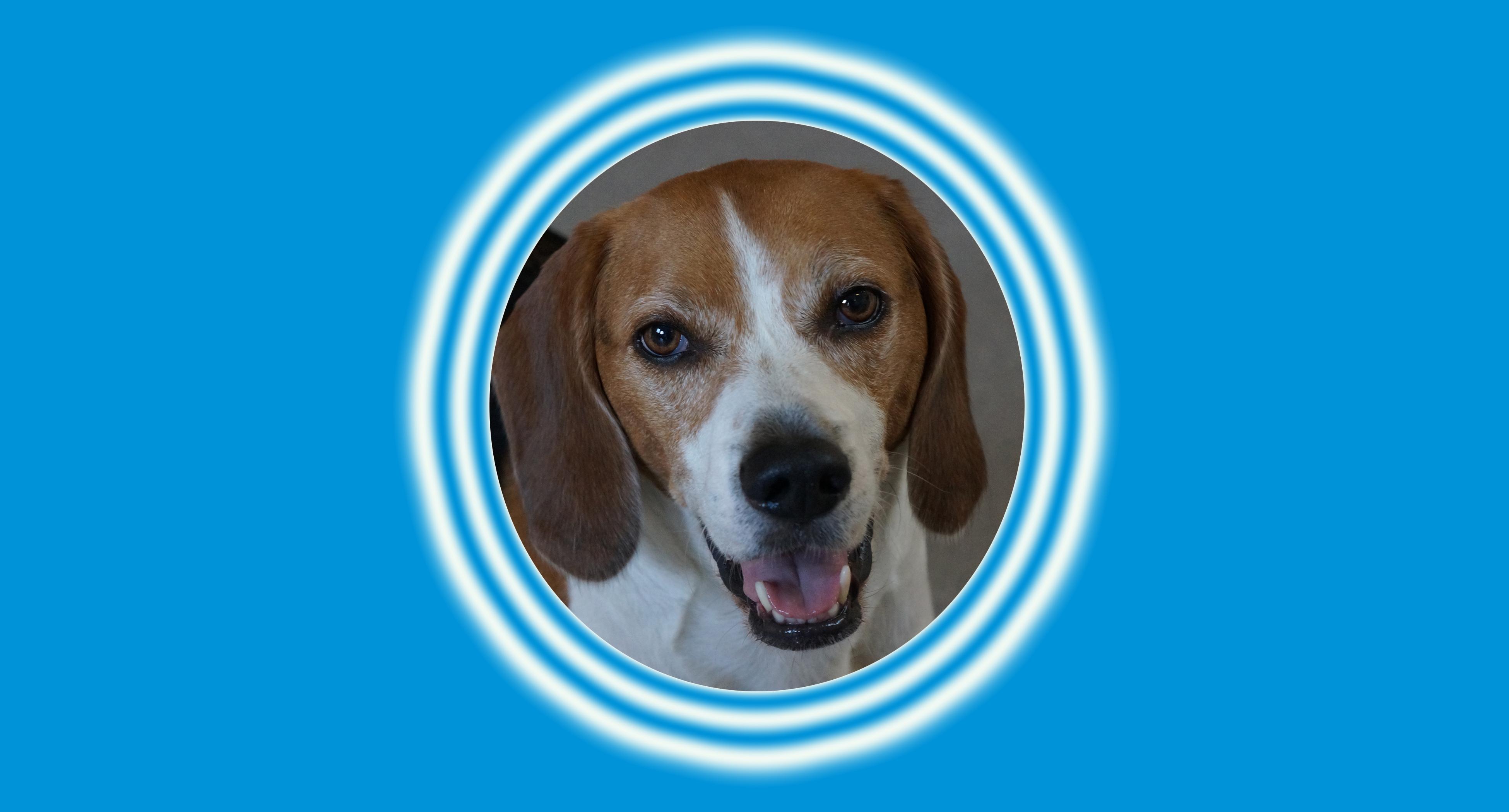 Dog of the Week: Beanie