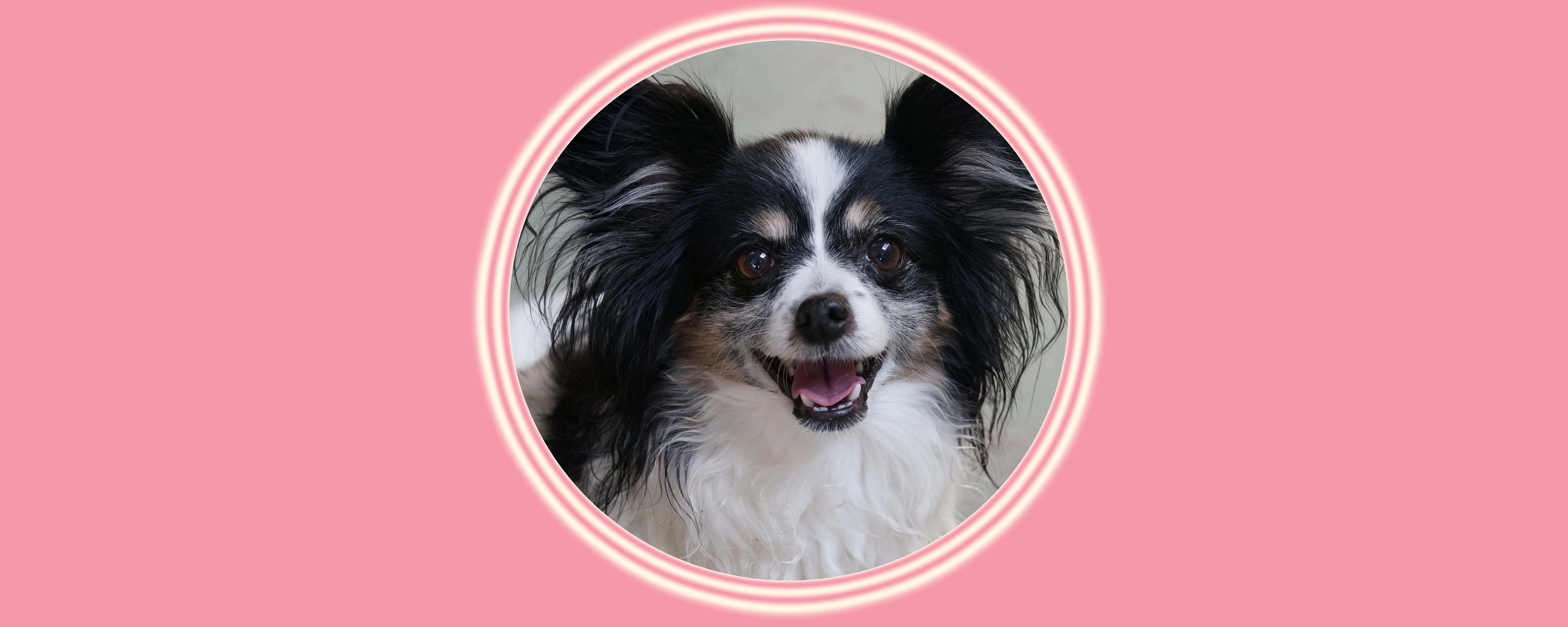 Dog of the Week: Gracie S.