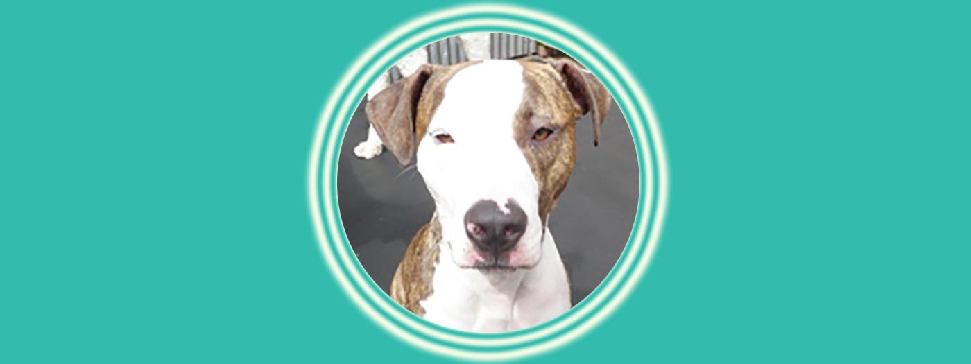 Dog of the Week: Truffles P.
