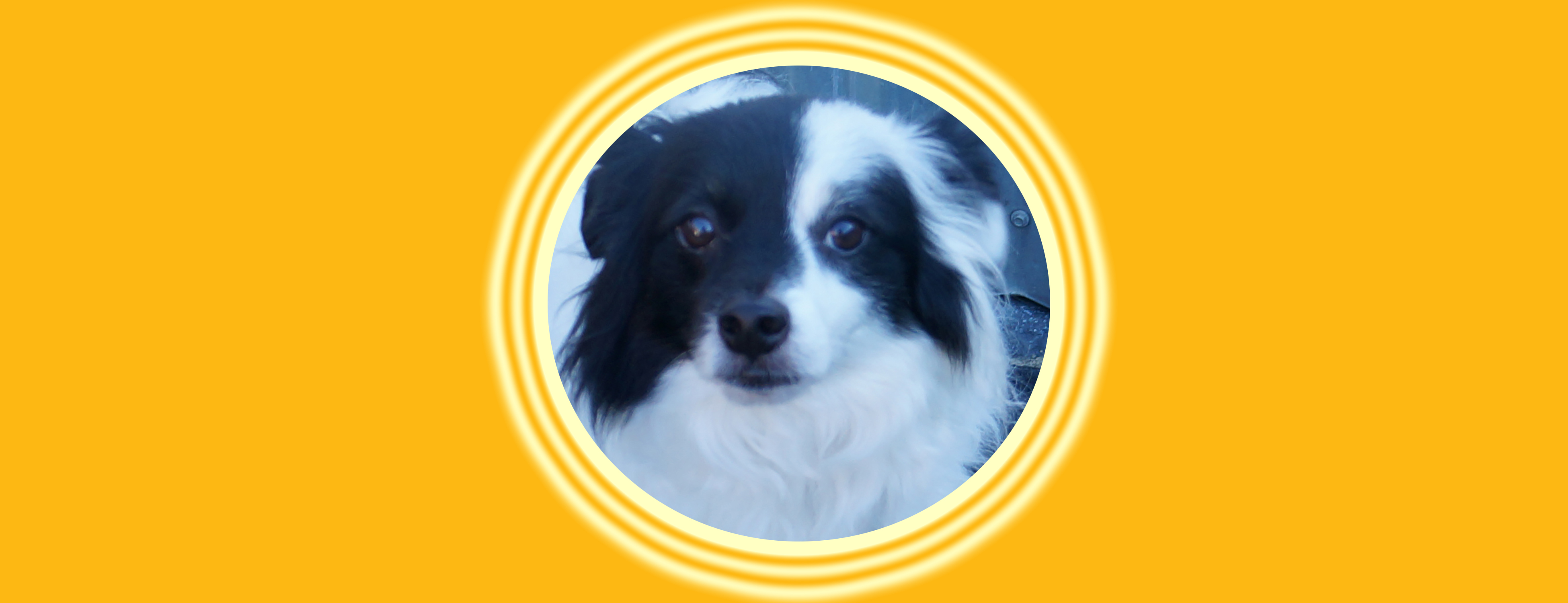 Dog of the Week: Samus J.