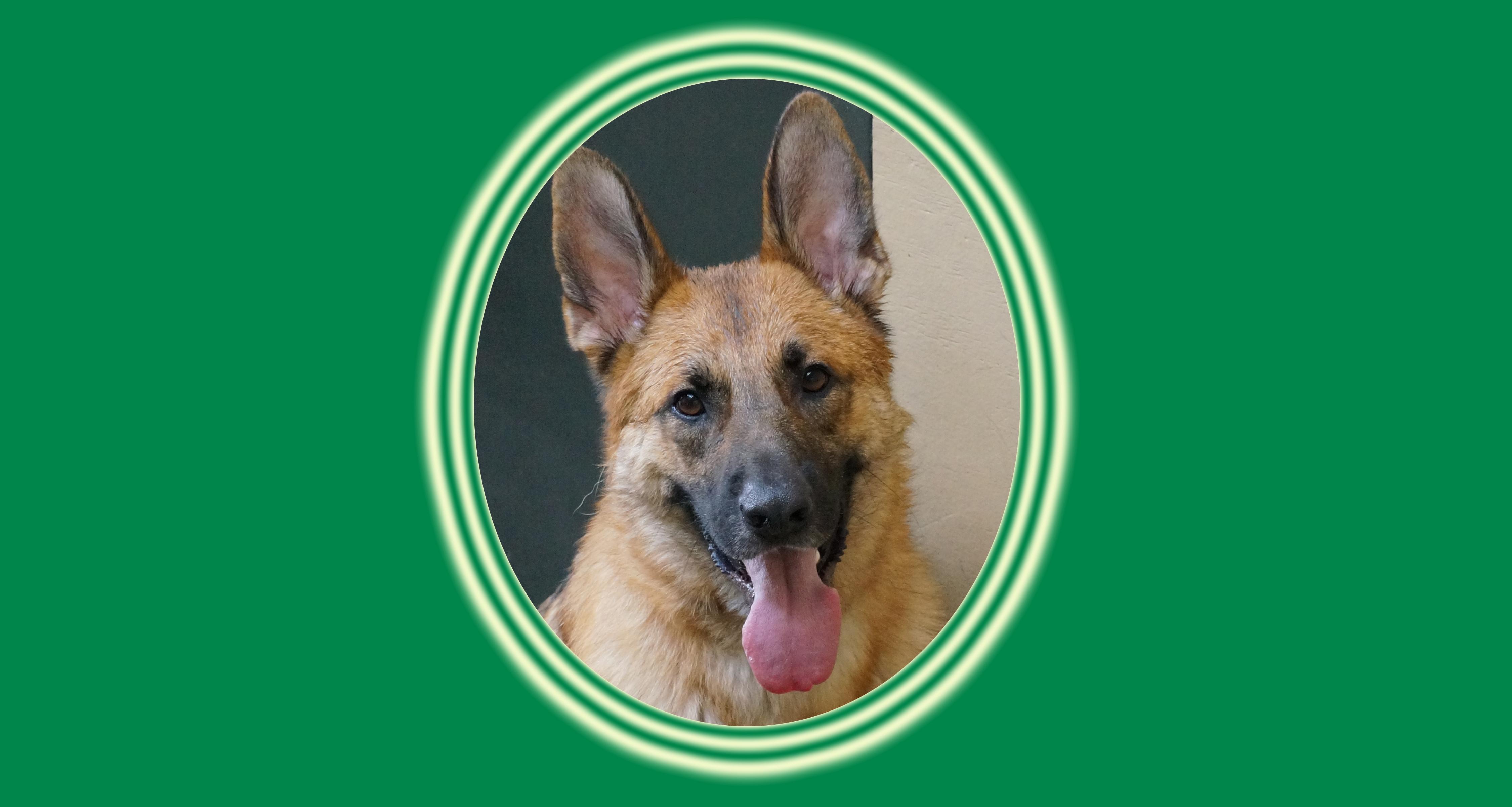 Dog of the Week: Griz