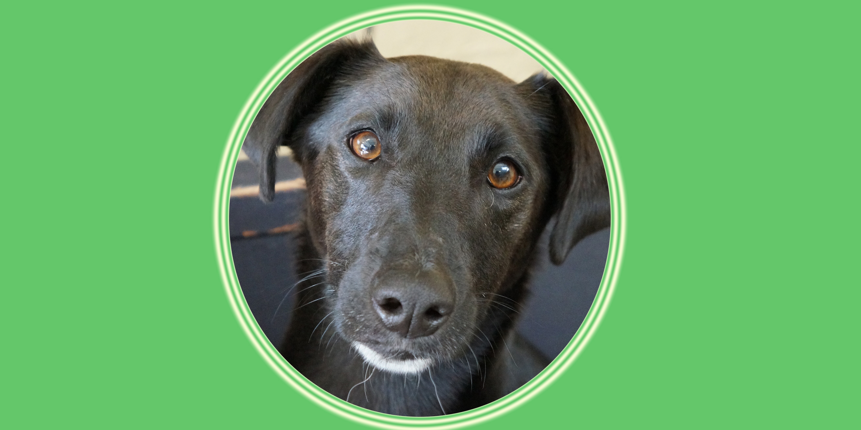 Dog of the Week: Dill F.