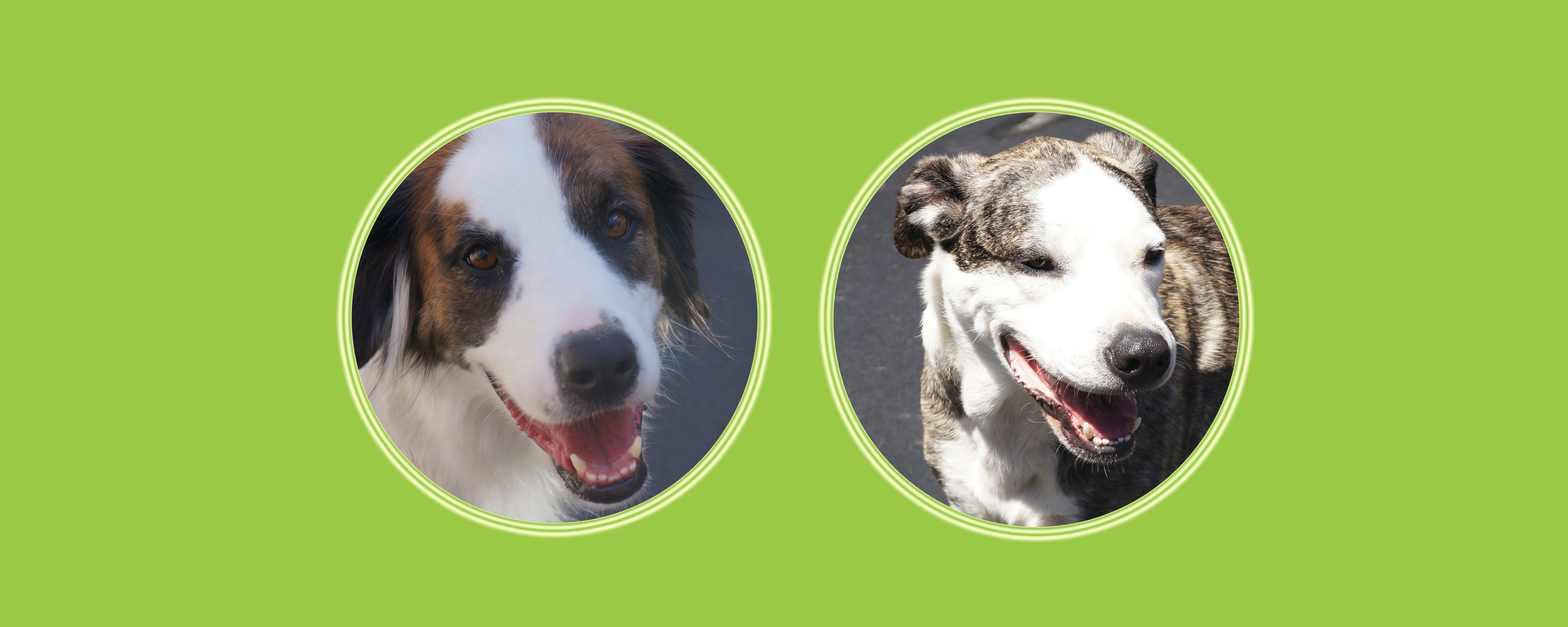 Dogs of the Week: Alpine + Bobby