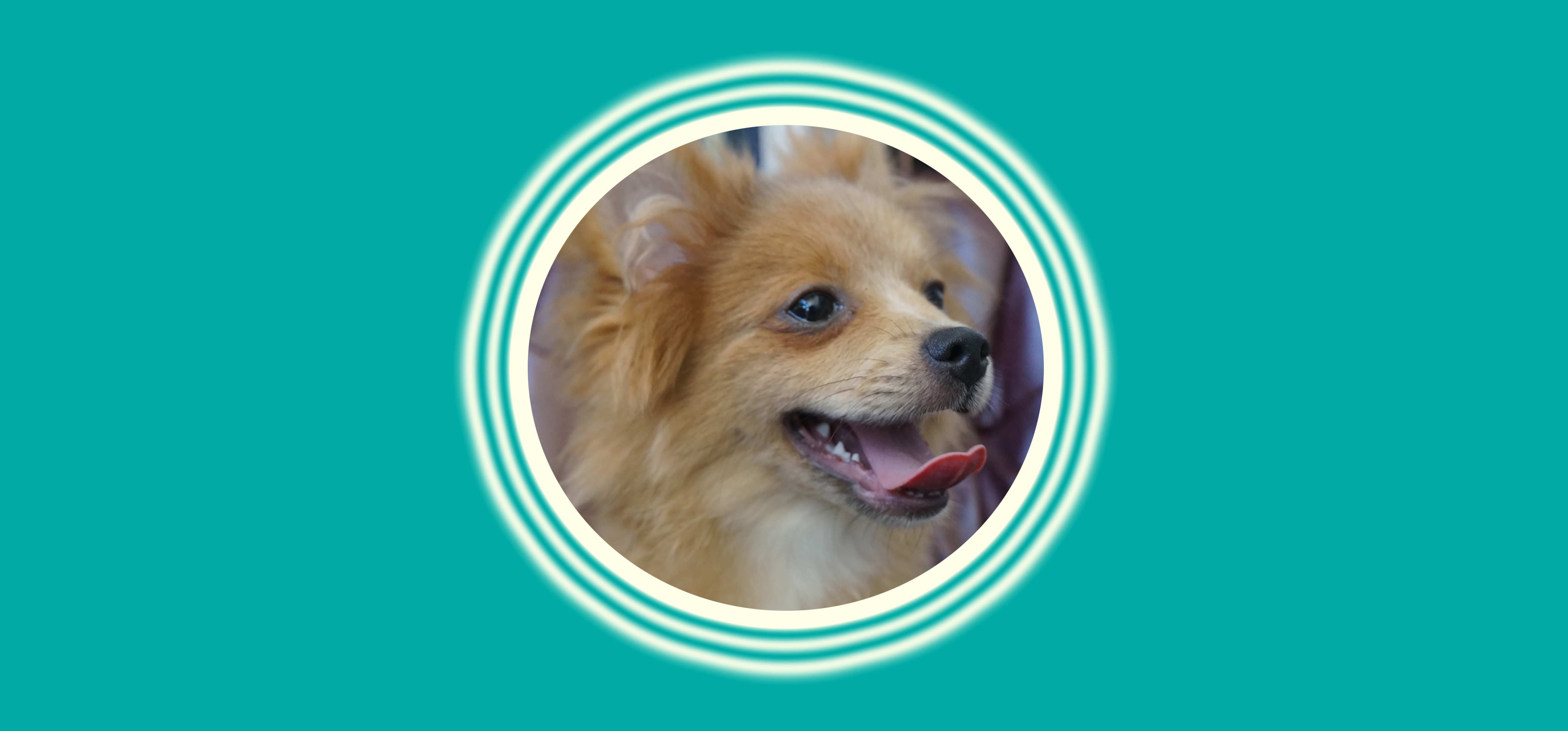Dog of the Week: Booster