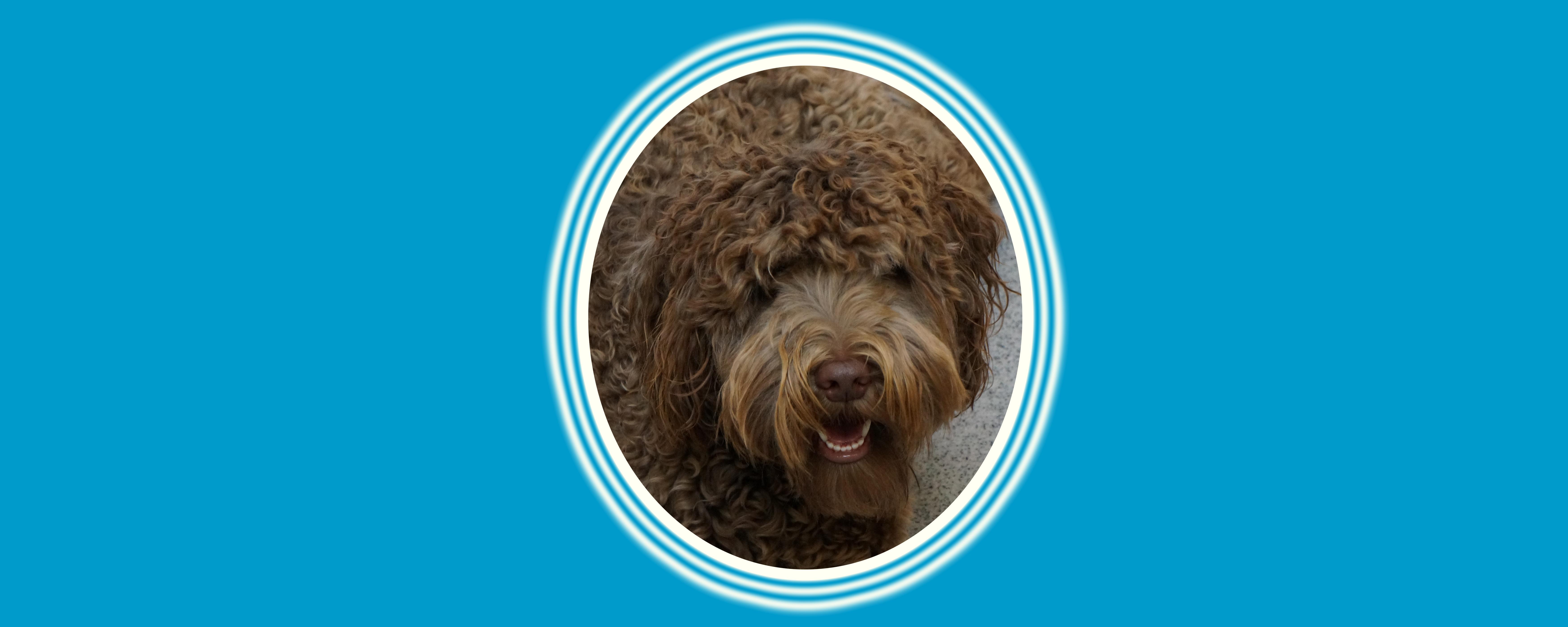 Dog of the Week: Tucker