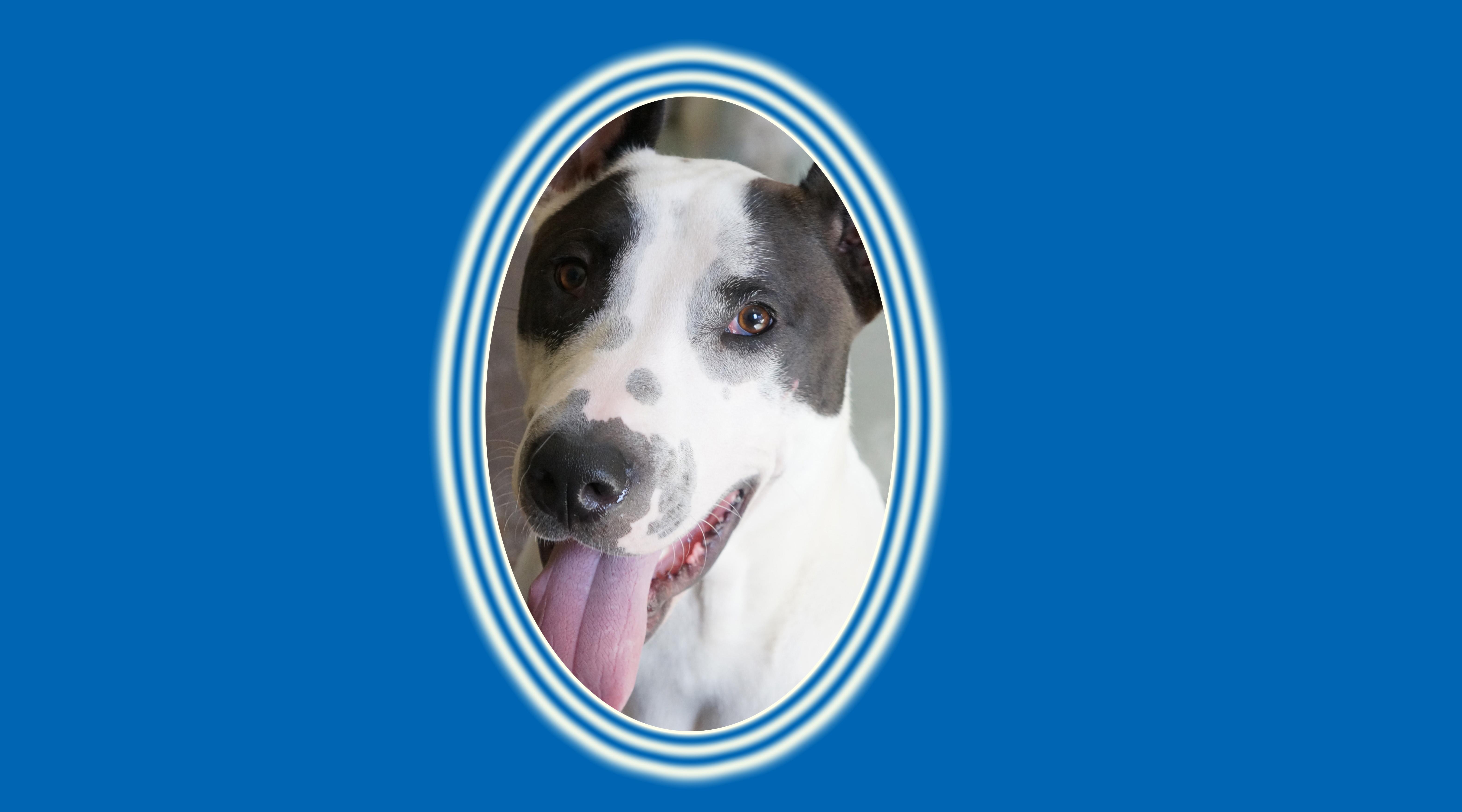 Dog of the Week: Bentley L.