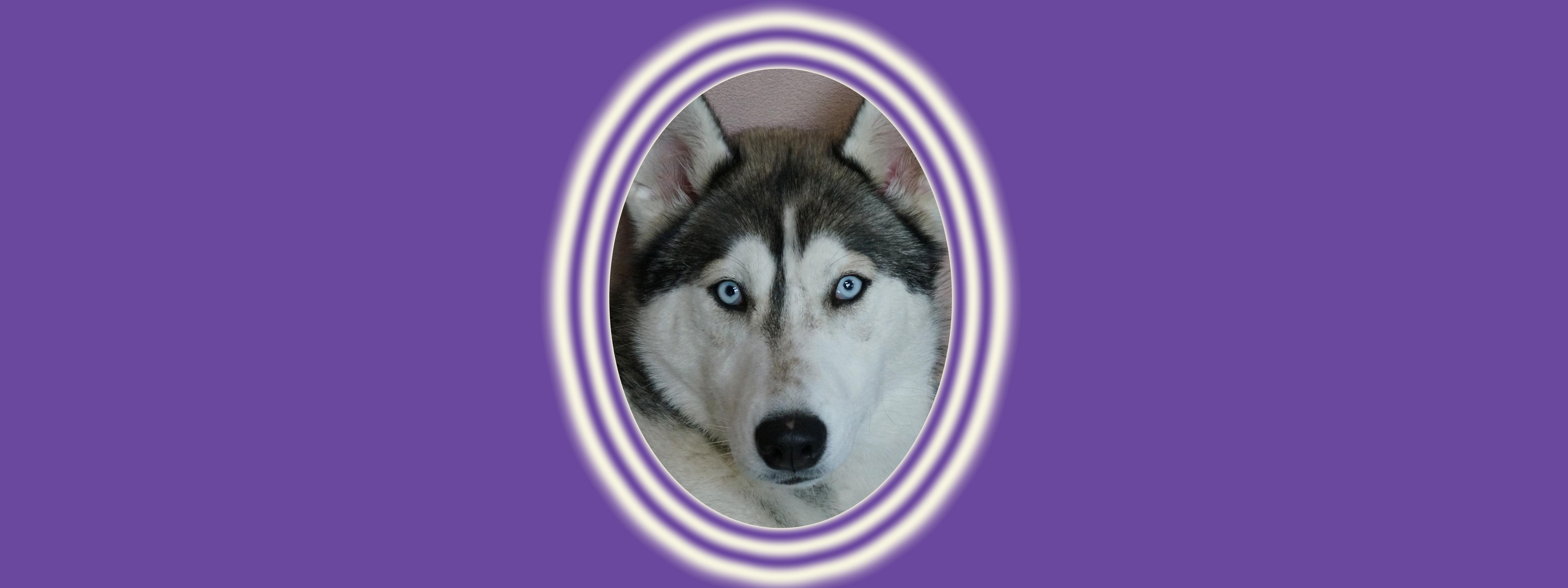 Dog of the Week: Leia G.