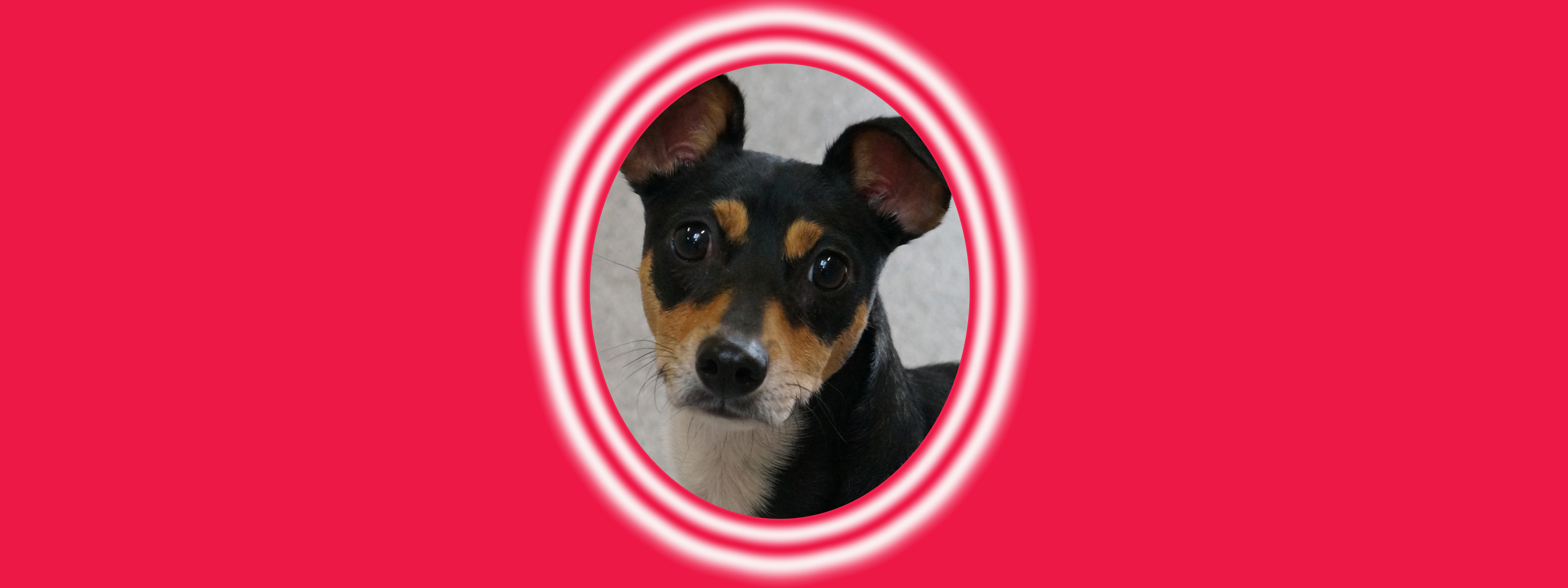 Dog of the Week: Lucky H.