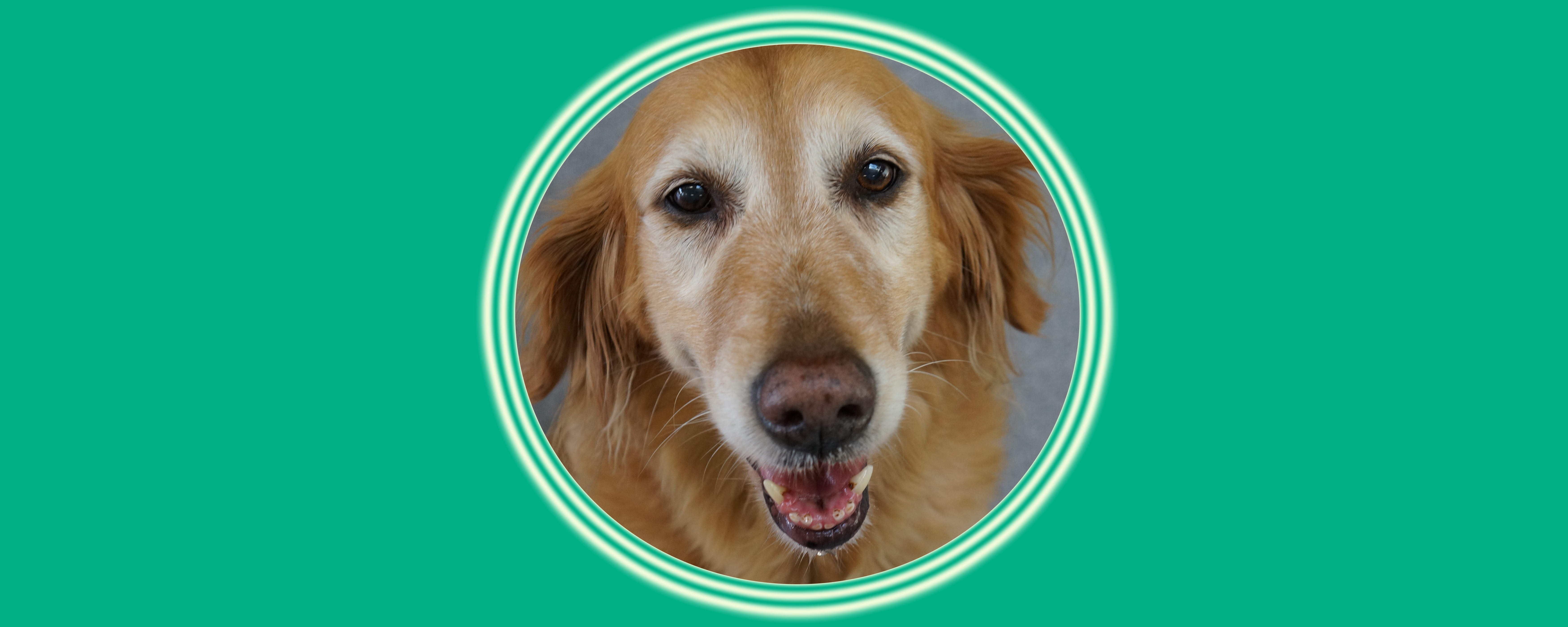 Dog of the Week: Blossom