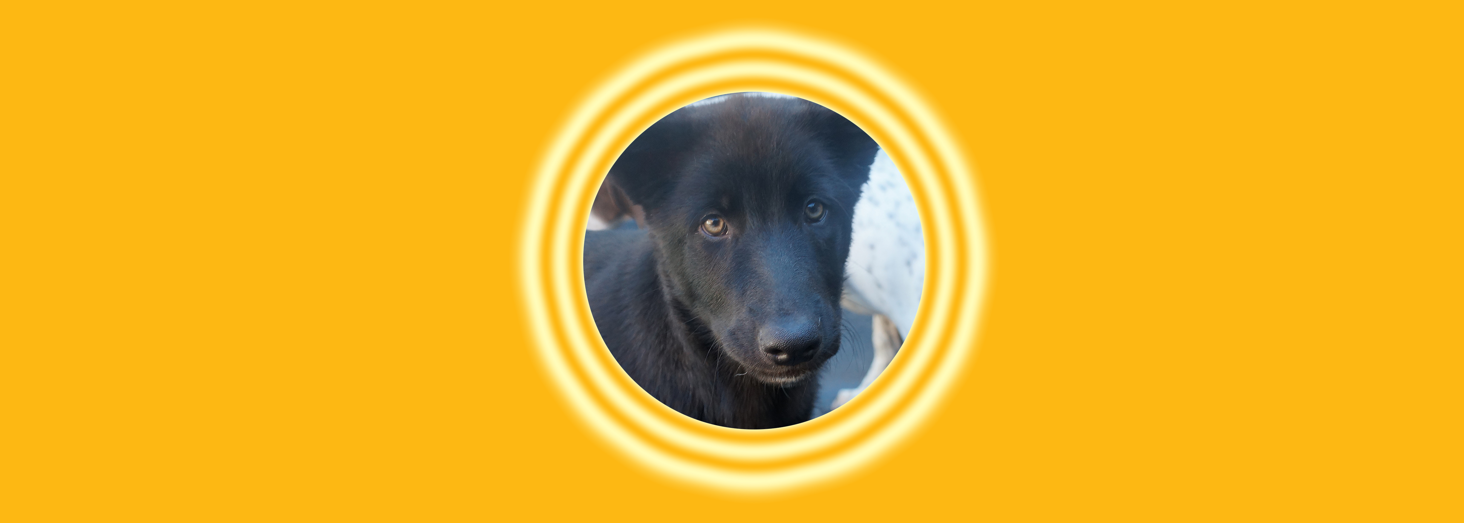 Dog of the Week: Howl