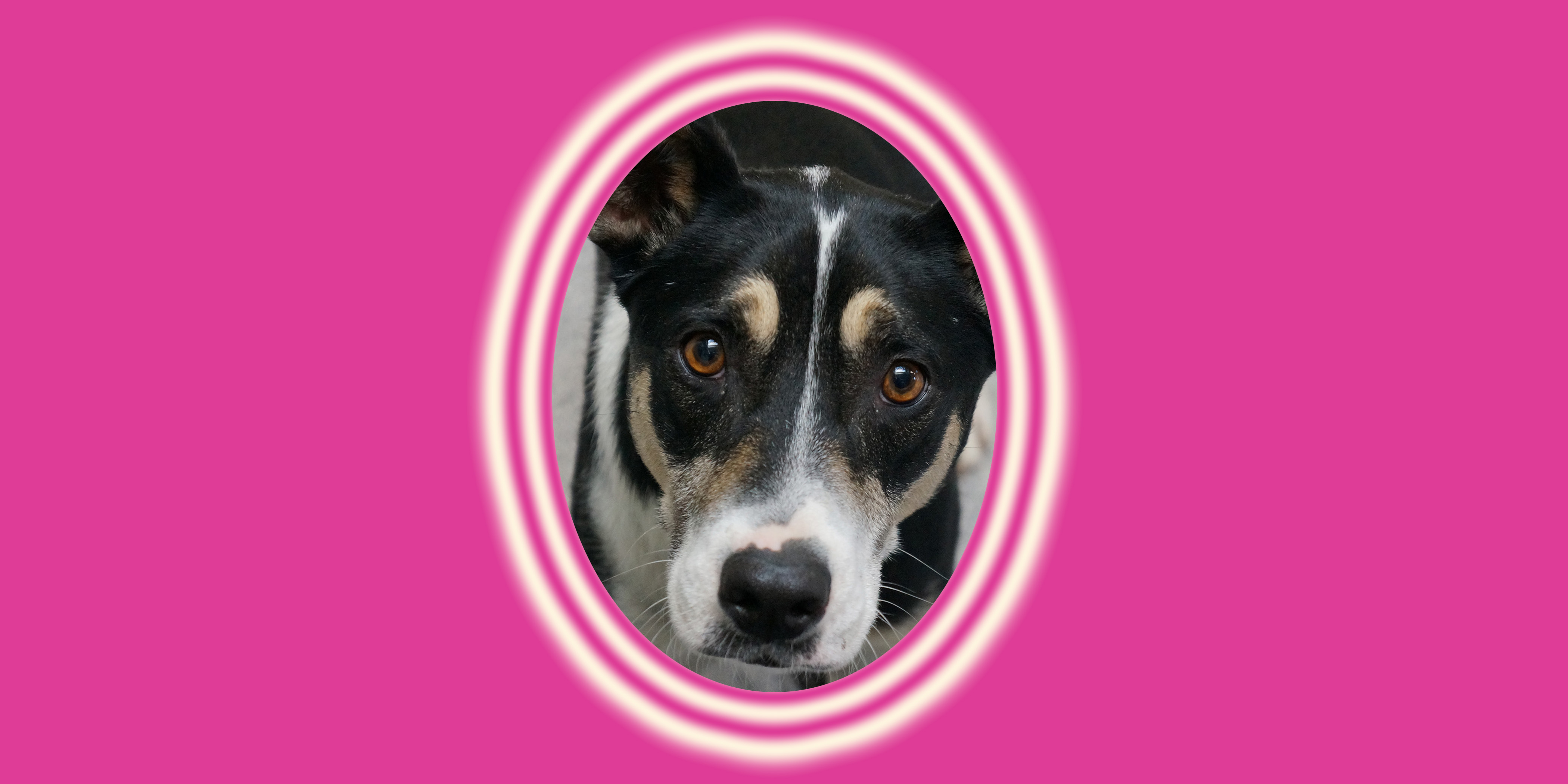 Dog of the Week: Ripley