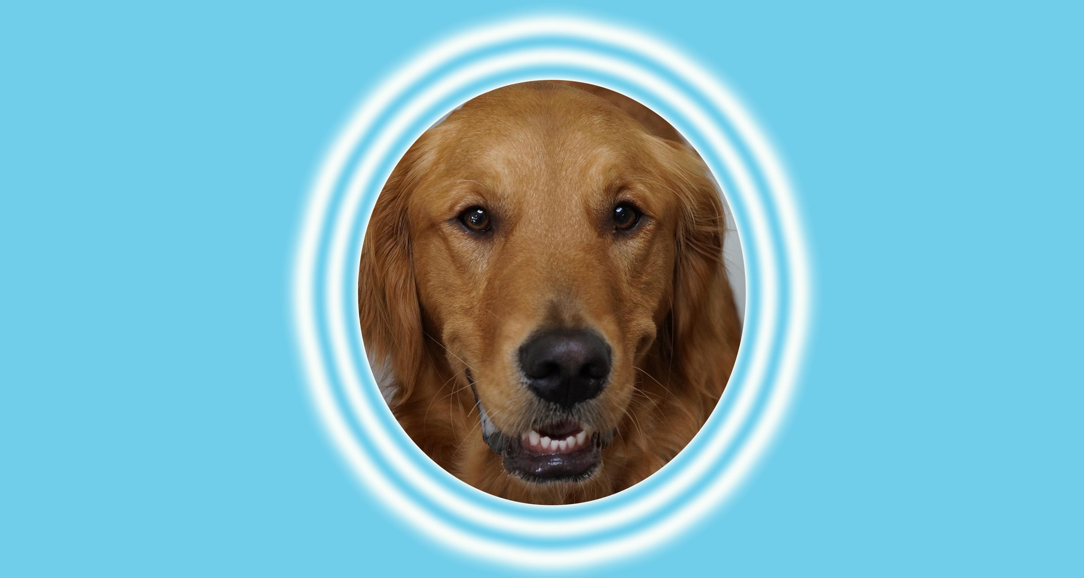 Dog the Week: Wrigley