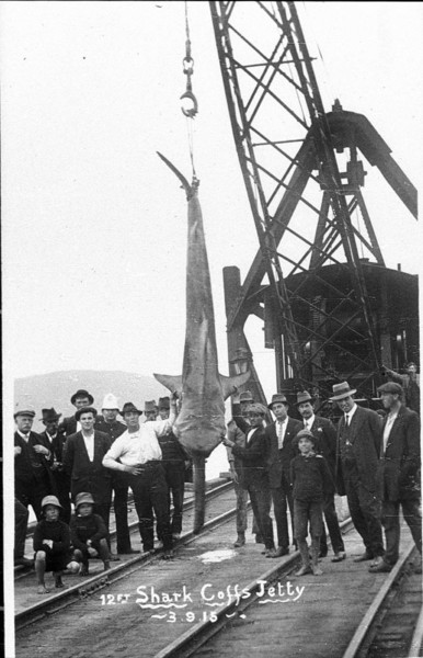 Shark on show Coffs Harbour 1915, From State Library NSW collection