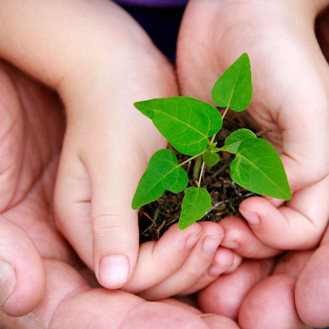 Seedling plant in the hands of a child supported by an adult – symbolising new life, growth and support