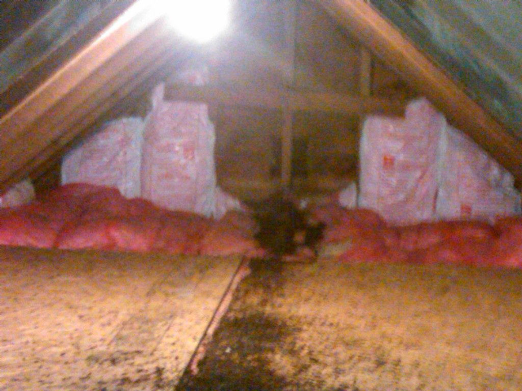Bat guano in that attic Richmond