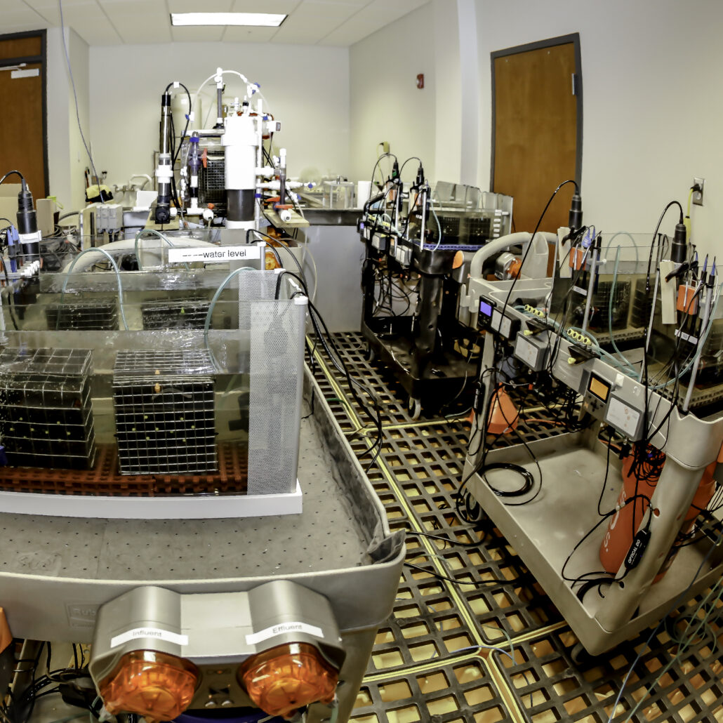 Pancopia Laboratory Set Up
