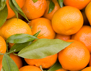 Satsumas from Side Hill Citrus