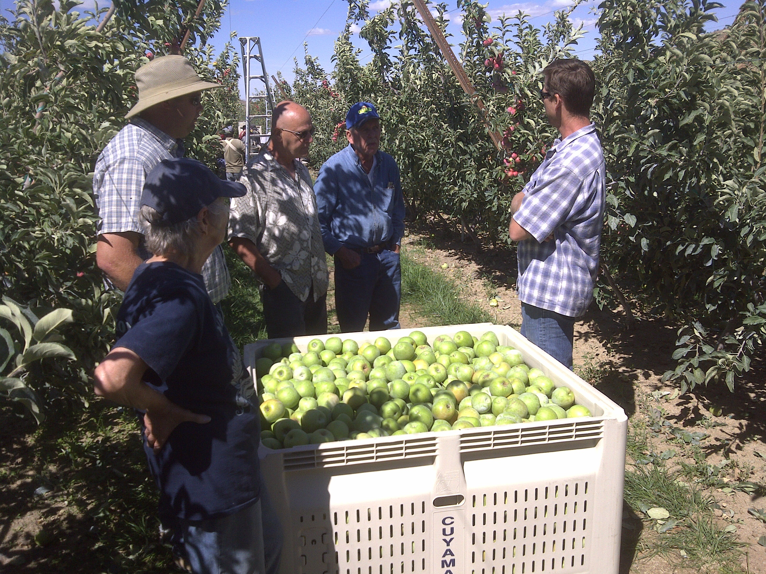 Cuyama Orchards
