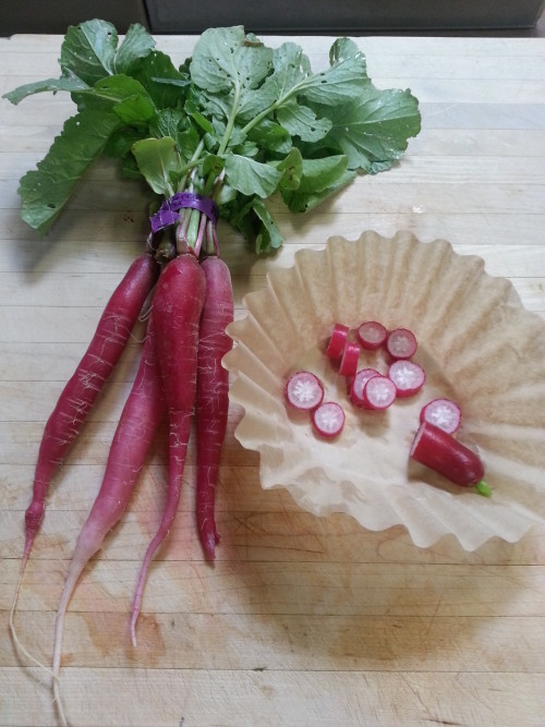 Dragon tail radishes