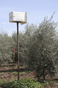 Barn owl boxes are placed in the fields to protect against gopher infestations