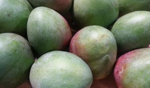 Kent mangos 2