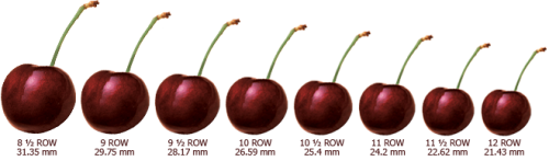 CherrySizingChart