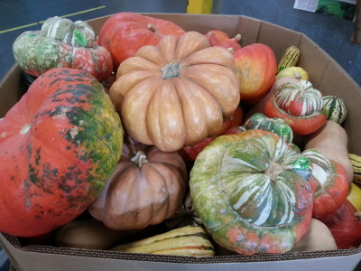 Mixed winter squash bin