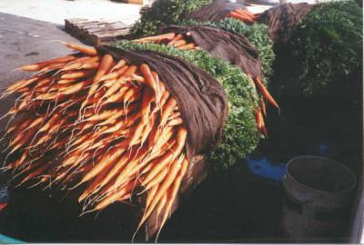 Nantes Carrots 2