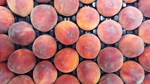 Burkart Peaches 500