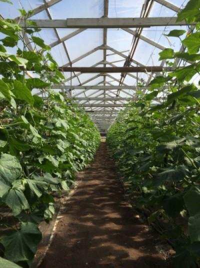Best greenhouse