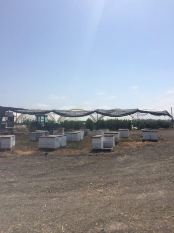 Rancho rents bee hives