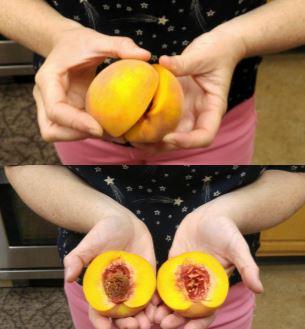 Freestone Peach